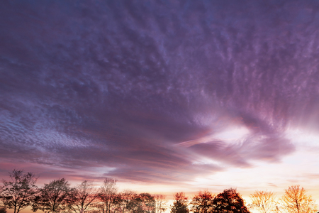 Purple sunset over rural trees. Natural landscape Reklamní fotografie