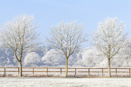 Beautiful rural winter scene with heavy frost on trees and a two rail wooden fence. Clear blue sky and frozen fields. Three trees in a line.