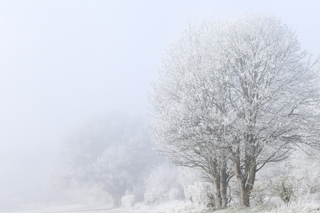 Stunning winter landscape with frost covered trees and freezing fog. Rural scene with white mist and ice covered trees