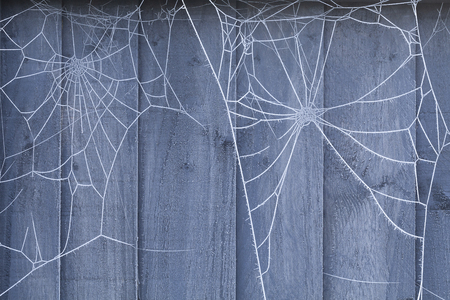 Spiders web on a blue wooden fence covered in ice crystals during winter. Reklamní fotografie