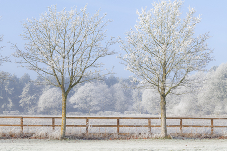Beautiful rural winter scene with heavy frost on trees and a two rail wooden fence. Clear blue sky and frozen fields. Two trees in a line