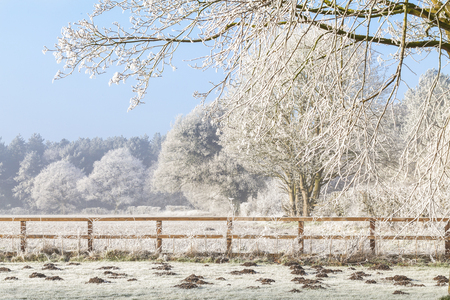 Beautiful rural winter scene with heavy frost on trees and a two rail wooden fence. Clear blue sky and frozen fields with mole hills
