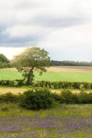 Summer rural sunset landscape in England with fields, trees and hedges. Space in the sky for text
