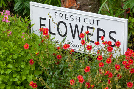 Beautiful summer flowers in a garden bed with a white sign saying fresh cut flowers. Close up of an amazing display of blooming plants of many colours with a new modern sign hidden in the flowerbed.
