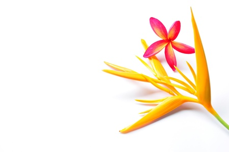 Heliconia Flower with red plumeria on white background Isolated Stock Photo - 9866625