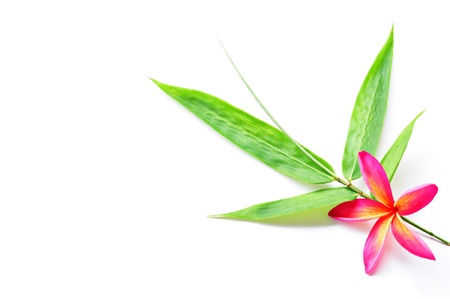 health and beauty: Red plumeria with bamboo leaf Isolated