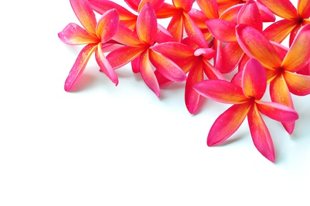 A lot of framing plumeria Stock Photo - 9991844