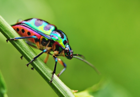 Colorful Bug Resting On Grass Stockfoto