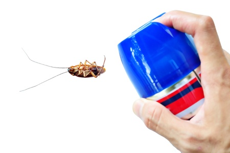 Pest Control by Spraying on Cockroach Stock Photo - 10180455