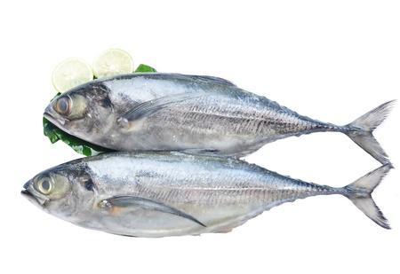 Fish Isolated On White photo