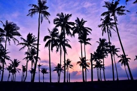 palm trees silhouette: Beautiful sunrise and colorful sky