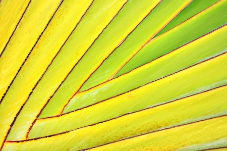 Pattern of ornamental banana leaves branch photo