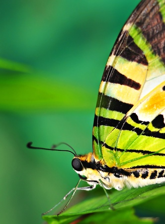 Beautiful variety of color patterns butterfly photo