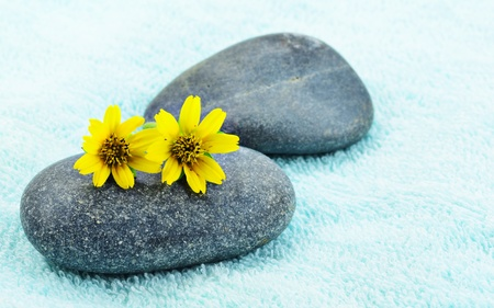 Beautiful yellow daisy flower on stone spa concept photo