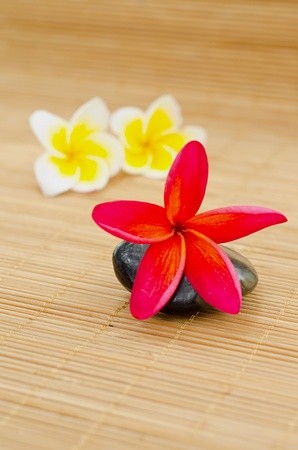 Simple Spa Concept : Red frangipani on stone Stock Photo - 13505871