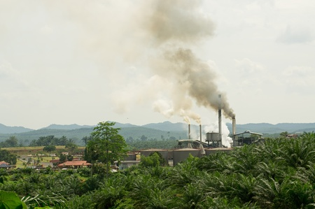 air pollution produced by the palm oil factory photo