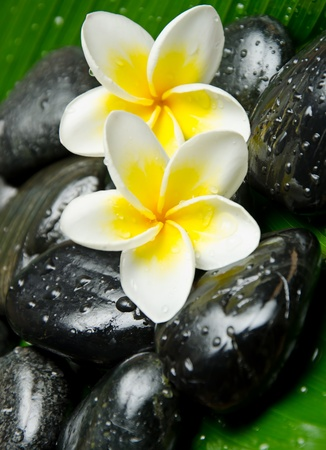 Tratamiento de spa - Blanco Amarillo Plumeria y piedra photo