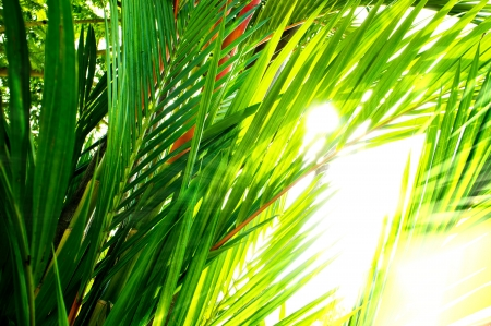 Palm leaf and morning light photo