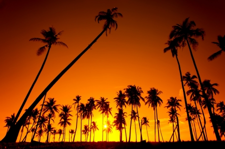 Silhouetted of coconut tree during sunset photo