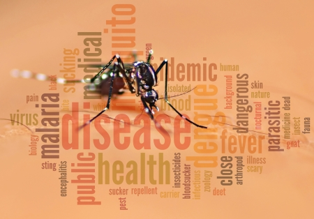 Aedes mosquito blend with info text