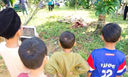 slaughtering: Pahang, Malaysia - OKTOBER 26: non identificati bambini malesi musulmani guardando in macellazione di una mucca durante l'Eid Al-Adha Al Mubarak, la Festa del Sacrificio in Ottobre 26, 2012 in Pahang, Malaysia.
