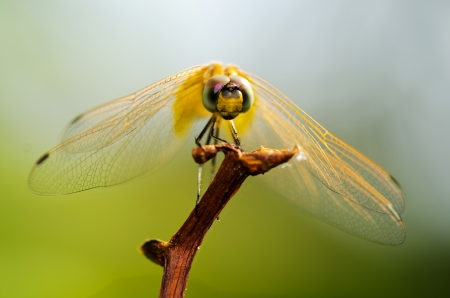 Dragonfly on sticks photo