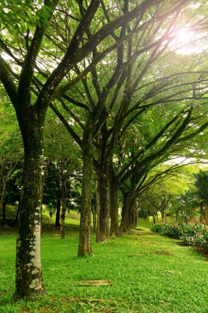 deep south: Forest landscape park at Malaysia, Asia  Stock Photo
