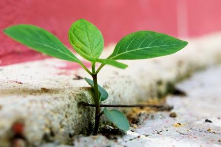 Business concept of break through brick  Stockfoto