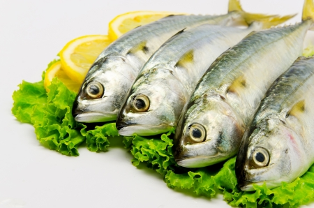 Fresh Mackerel with Lemon  Stockfoto
