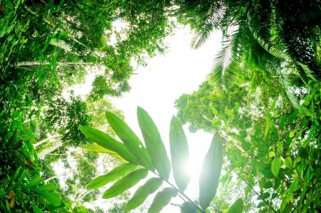Sun shining into tropical forest, fisheye lens view   photo