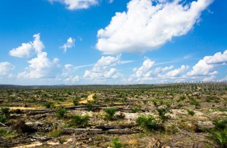 trabajador petrolero: Vistas de las plantaciones de aceite de palma en la replantación Foto de archivo