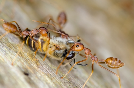 cooperate: Macro of ant - Cooperate concept