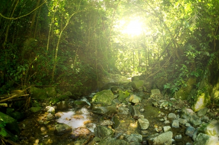 Nature rain forest photo