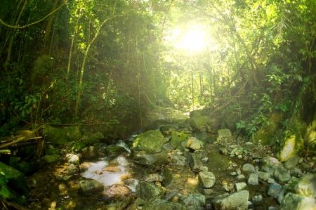 pahang: Nature rain forest Stock Photo