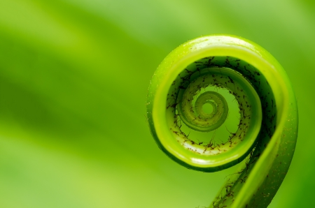 unfurl: Exotic tropical shoots leaf with shallow depth of field  dof   Stock Photo