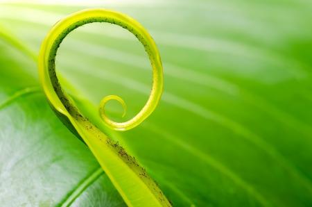 einrollen: Exotische tropische schie�t Blatt mit geringer Sch�rfentiefe DOF Lizenzfreie Bilder