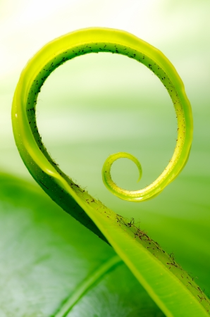 Exotic tropical shoots leaf with shallow depth of field  dof Stock Photo - 21400970