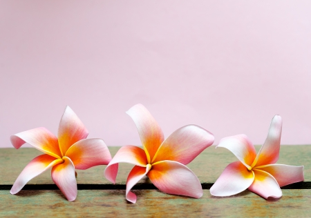 Plumeria flower on wood isolated photo