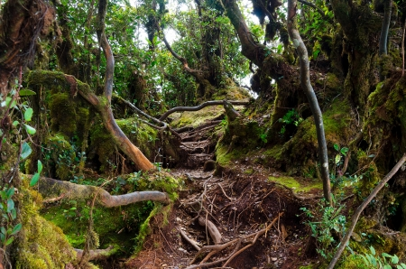카메론 하이랜드 말레이시아의 이끼 숲 스톡 콘텐츠
