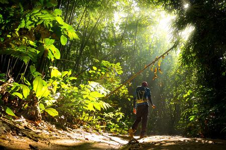 日当たりの良い光の朝と自然緑の森でハイカー。