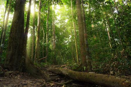 rica: Nature rain forest with morning sunlight Stock Photo