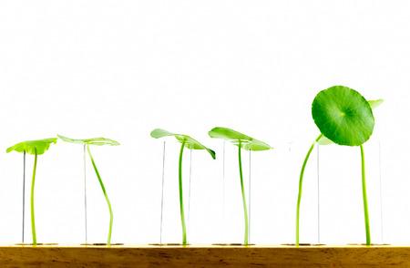 crecimiento planta: crecimiento de las plantas en prueba de concepto de medio ambiente tubo de vidrio