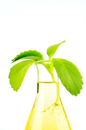 agricultural engineering: Growth up plant in glass tube test