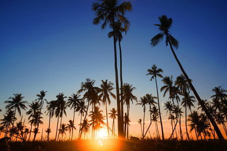 low light: Dramatic stunning morning light sunset and Silhouetted of coconut tree in low light photography - Summer holiday concept Stock Photo