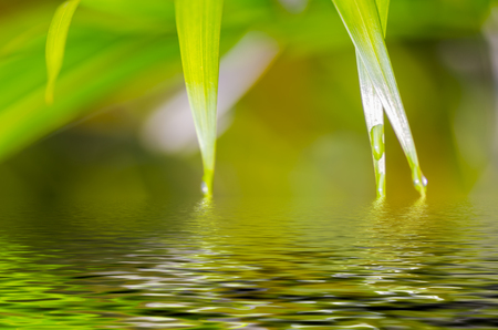water plants: Natural defocused and depth of field (DOF) effect of palm leaf, the bokeh effect and water reflection