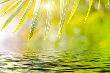 reflection: Natural defocused and depth of field (DOF) effect of palm leaf, the bokeh effect, morning sunlight and water reflection