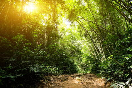 Nature rain forest with morning sunlight Stock Photo