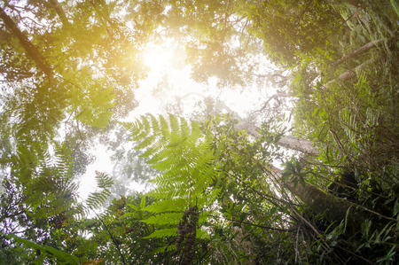 nature of sunlight: Nature rain forest with morning sunlight Stock Photo