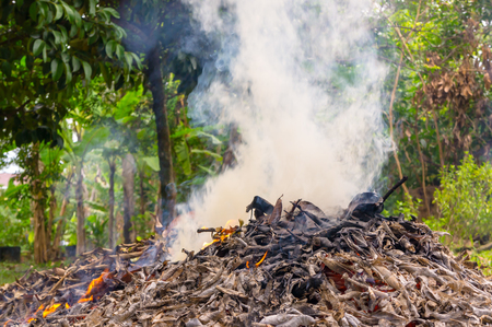 environmental issue: Burning dry leaf fallen - Environmental issues