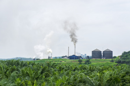 air pollution produced by the palm oil factory Reklamní fotografie - 68905647